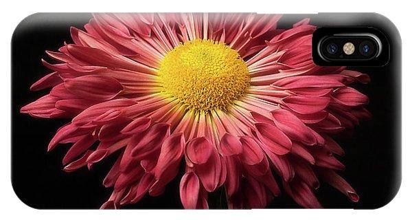 Beautiful Chrysanthemum IPhone Case