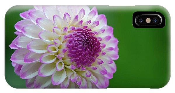 Beautiful Dahlia 1 IPhone Case