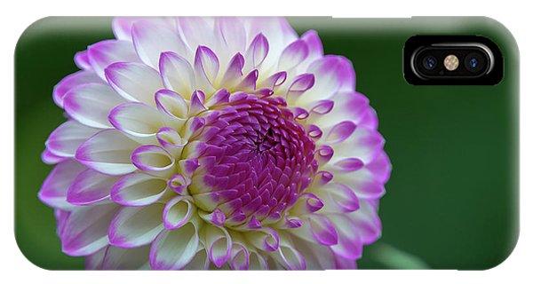 Beautiful Dahlia 2 IPhone Case