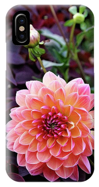 Beautiful Dahlia IPhone Case