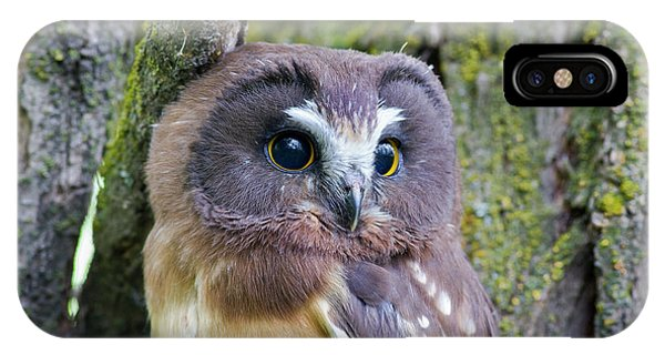 Beautiful Eyes Of A Saw-whet Owl Chick IPhone Case