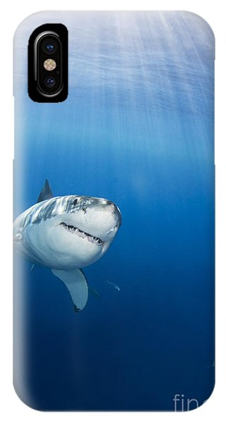 Beautiful Great White IPhone Case