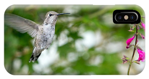 Beautiful Hummingbird iPhone Case - Beautiful Hummingbird by Rebecca Cozart