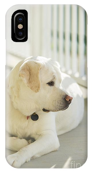 Yellow Lab iPhone Case - Beautiful Labrador Retriever  by Diane Diederich