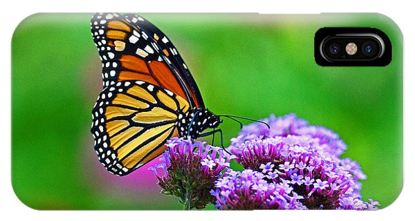 Beautiful Monarch IPhone Case