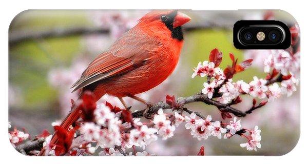 Beautiful Northern Cardinal IPhone Case