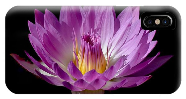 Beautiful Pink Pearl Lily IPhone Case