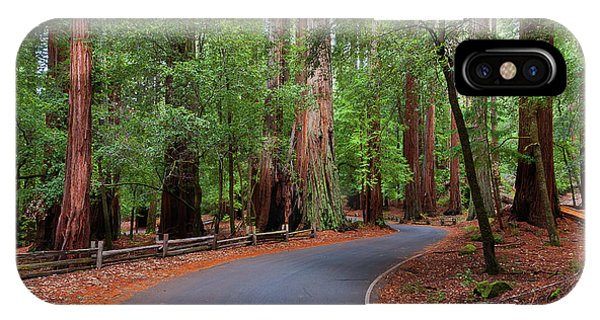 Beautiful Redwood Grove IPhone Case