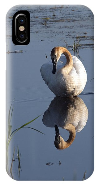 Horicon Marsh iPhone Case - Beautiful Reflection by Jayne Gohr