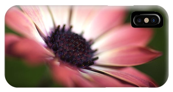 Beautiful Rich African Daisy Zion Red Flower IPhone Case