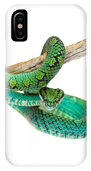 Serpent iPhone Case - Beautiful Sri Lankan Palm Viper by Susan Schmitz