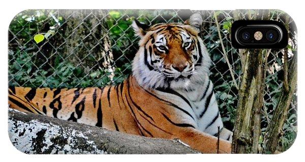 Beautiful Tiger IPhone Case