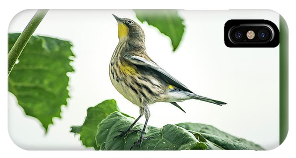 IPhone Case featuring the photograph Beautiful Warbler by John Brink