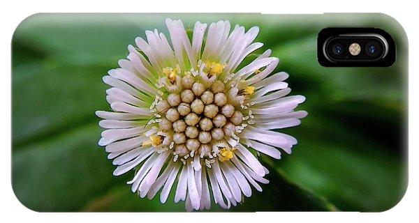 Beautiful White Flower Phone Case by Argie Dante