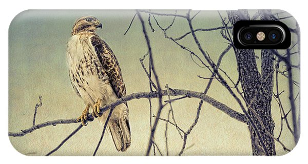 Red-tailed Hawk On Watch IPhone Case