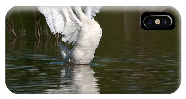 IPhone Case featuring the photograph Beauty by Tam Ryan