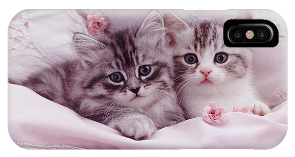 Bedtime Kitties IPhone Case