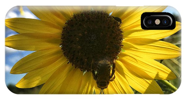 Bee And Sunflower IPhone Case