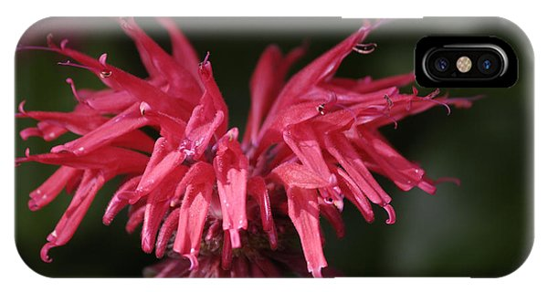 Bee Balm IPhone Case