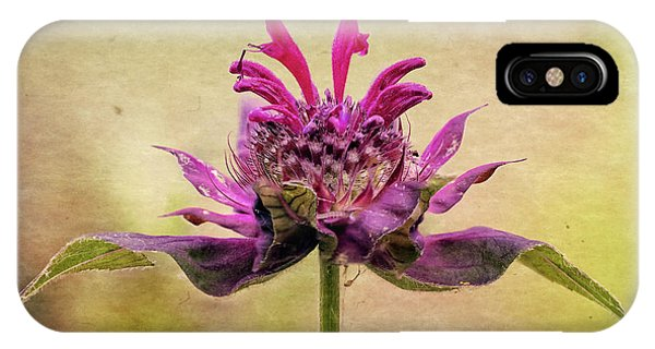 Bee Balm With A Vintage Touch IPhone Case