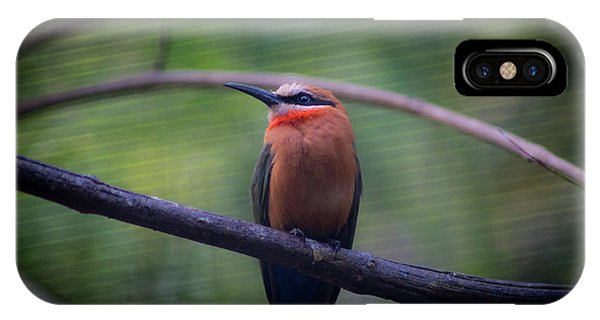 Bee-eater IPhone Case