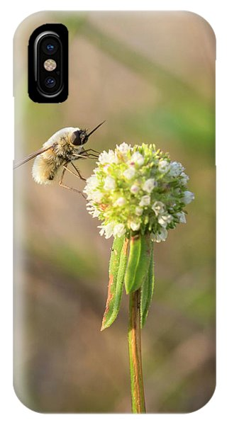 Bee Fly On A Wildflower IPhone Case