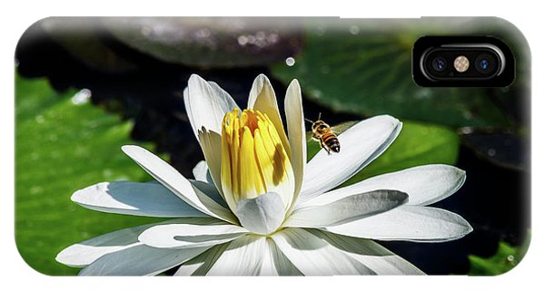 Bee In A Flower IPhone Case