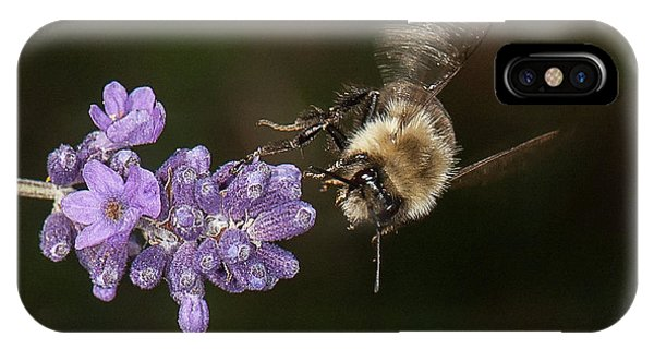 Bee Landing On Lavender IPhone Case