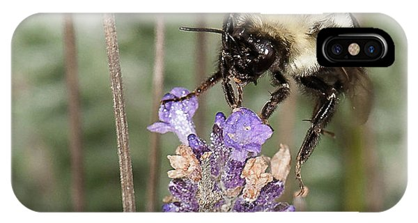 Bee Lands On Lavender IPhone Case
