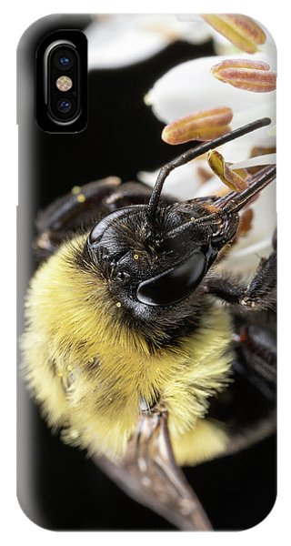 IPhone Case featuring the photograph Bee Macro 1 by Brian Hale