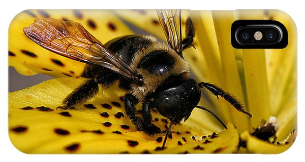 Bee On A Lily IPhone Case