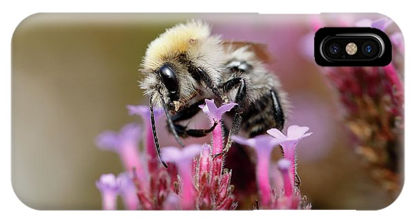 IPhone Case featuring the photograph Bee On A Verbena Bonariensis by Nick Biemans