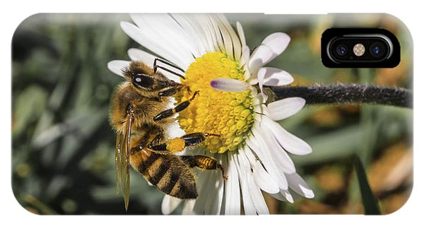 Bee On Flower Daisy IPhone Case
