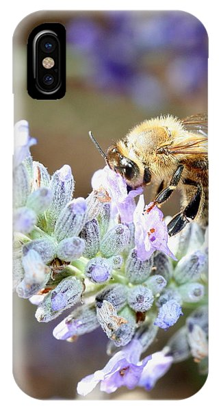Honeybee iPhone X Case - Bee On Flower . R7063 by Wingsdomain Art and Photography