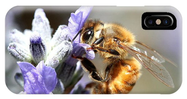 Honeybee iPhone X Case - Bee On Flower . R7115 by Wingsdomain Art and Photography