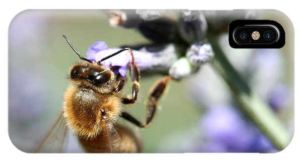 Honeybee iPhone X Case - Bee On Flower . R7117 by Wingsdomain Art and Photography