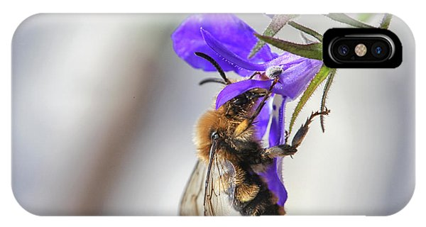 Bee On Purple Flower IPhone Case