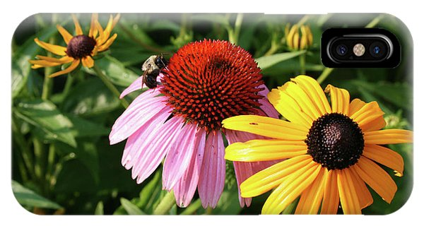 Bee iPhone X Case - Bee On The Cone Flower by Greg Joens