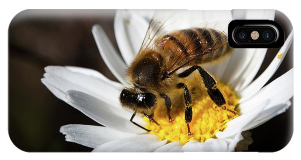 Bee On The Flower IPhone Case