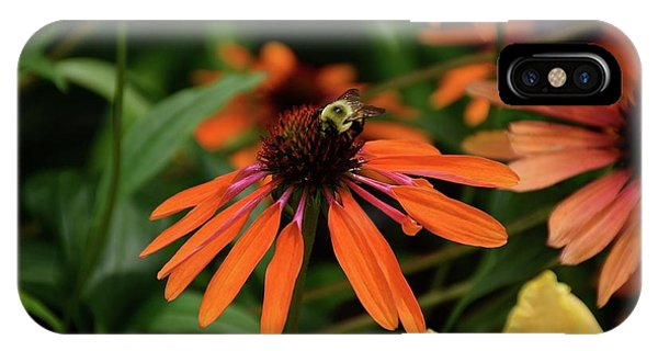 Bee Pollinating On A Cone Flower IPhone Case