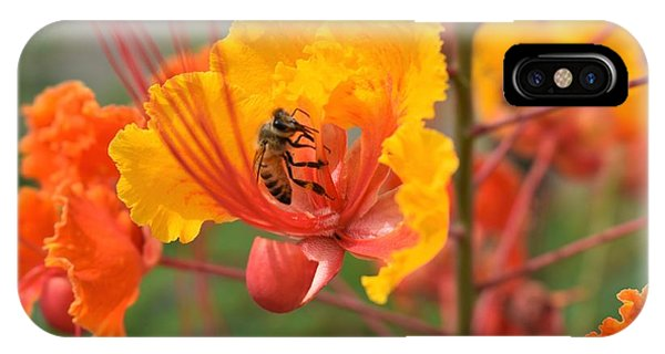 Bee Pollinating Bird Of Paradise IPhone Case