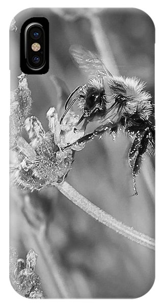 Bee Works Lavender IPhone Case