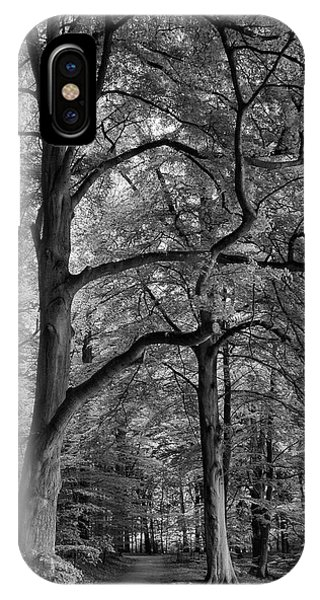Beech Forest - 365-222 IPhone Case