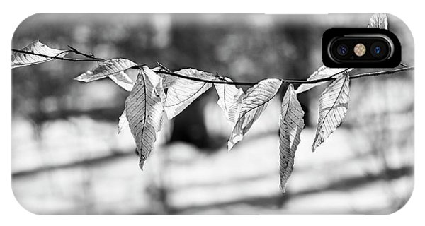 Beech Leaves 5 - Uw Arboretum - Madison IPhone Case