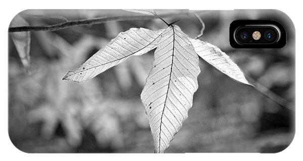 Beech Leaves - Uw Arboretum - Madison - Wisconsin IPhone Case