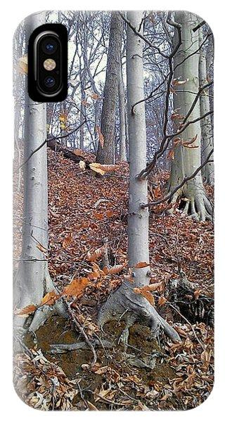 Beech Trees IPhone Case