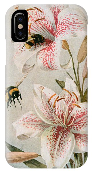 Honeybee iPhone X Case - Bees And Lilies by Louis Fairfax Muckley