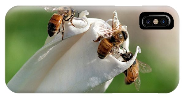 Bees On Angel Trumpet IPhone Case