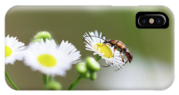 IPhone Case featuring the photograph Beetle Daisy by Brian Hale