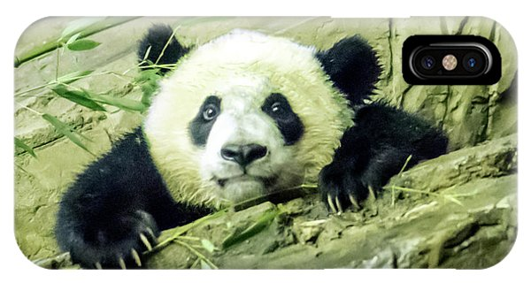 Bei Bei Panda At One Year Old IPhone Case